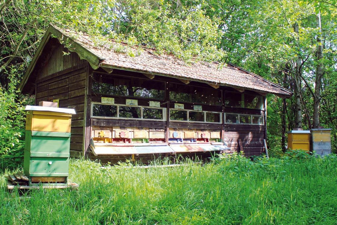 Herrmannsdorfer Bienen