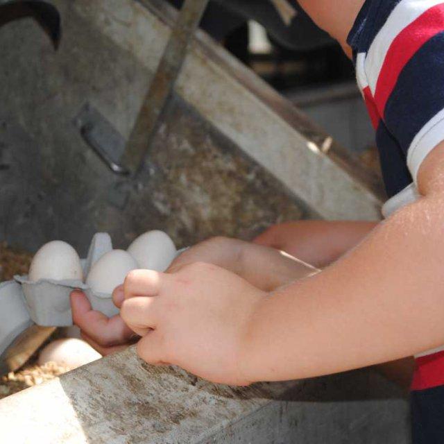Herrmannsdorfer Kinderführung und Eierpflücken