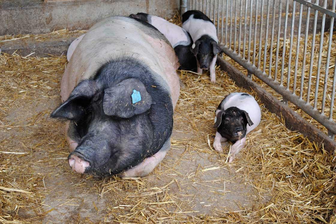 Madame Schwein Teil 6