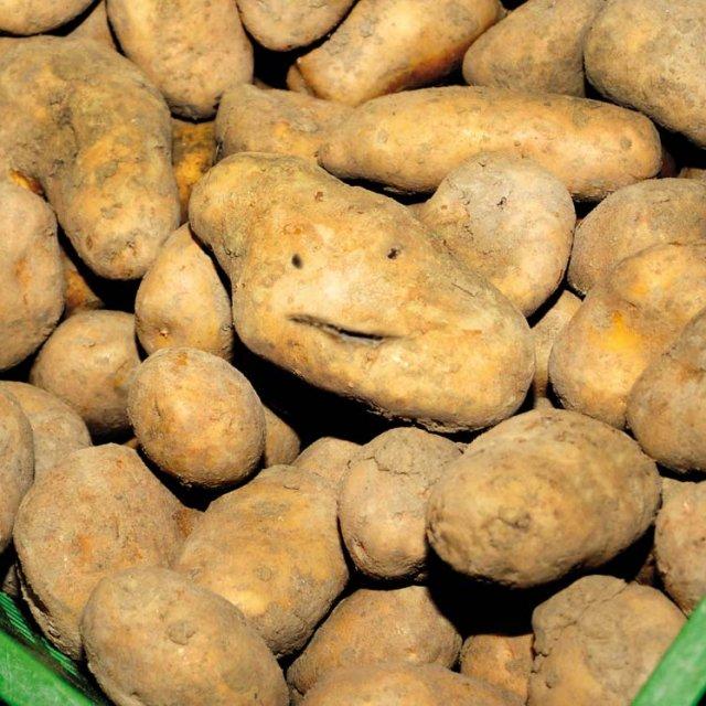 Herrmannsdorfer Kartoffeln