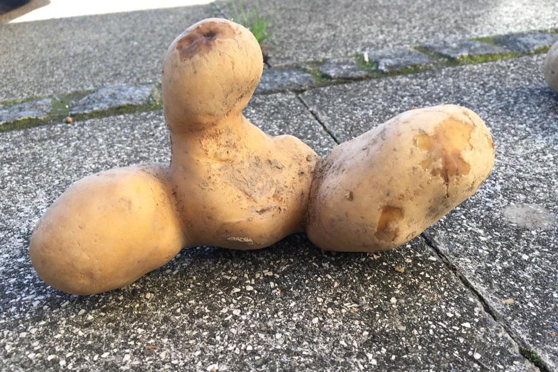 Herrmannsdorfer Kartoffelkunstwerke